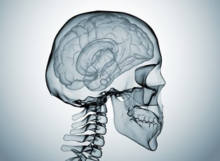 a medical image of a skull that must be protected from concussion risk factors