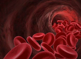 red blood cells susceptible to sickle cell anemia