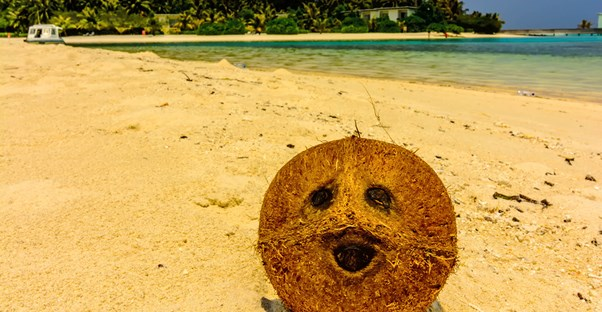 pareidolia will cause people to see a face in this coconut