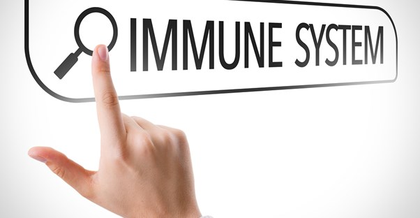 An immune system graphic