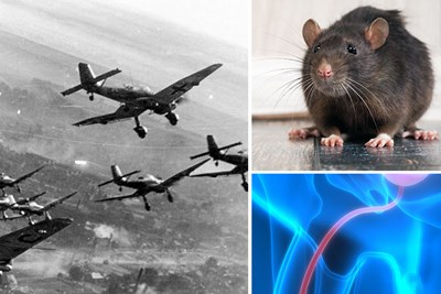 planes, a rat, and wire inside body